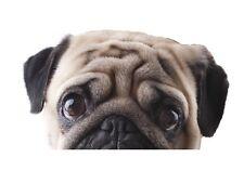Funny cute pet carlin crucifère jette un coup d'oeil yeux tristes vinyle autocollant voiture décalque