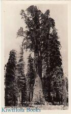 Postcard Rppc General Sherman Tree Sequoia Ntl Park Ca