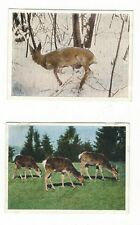 31/485 sammelbild animales silvestres corzos y äsendes Rotwild