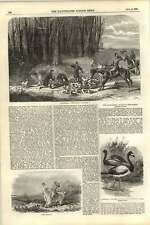 1855 Foxhunting Scene Rufford Hounds Notts Forest