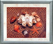Starfish with Seashell Ocean Wall Bathroom Decor Silver Framed Picture Art 20x24