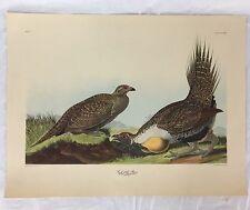 "J.J.Audubon Cock Of The Plains Art Print No 75 Plate CCCLXXI R Havell  21"" x 16"""