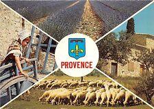 BR25691 Les Belles Images de Provence sheep mouton 2 scans france