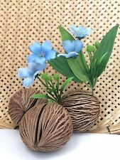3*Pong Pong Dried Oval Seed Natural Home Decor Dischidia Hanging Flower Planter