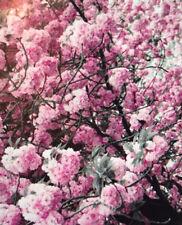 Diamond Painting Cherry Tree Unfinished