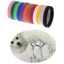 12 Farben Welpen ID Halsbänder Klettband Welpenhalsband Neu für Pup Hunde Katzen