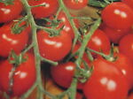 Gemüsesamen und Schnäppchenparadies