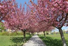 Vinyl 5x3FT Photo Backdrop Spring Cherry Trees Photography Background Studio
