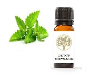 EkoFace Aromatherapy Premium 100% Natural Catnip Essential Oil 10ml