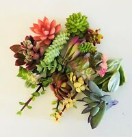20 assorted succulent cuttings-10 plus varieties, DIY dish garden-terrarium