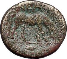 Neandreia in Troas 350Bc Apollo Horse Authentic Ancient Greek Coin i49186