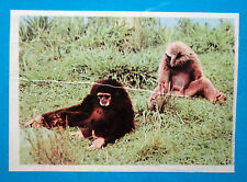 Figurina Panini-ANIMALI DI TUTTO IL MONDO 1965-n.38-GIBBONE-rec