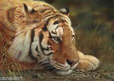 "Denis MAYER Siberian Tiger LTD Giclee Canvas art "" Beauty at Rest "" Signed"