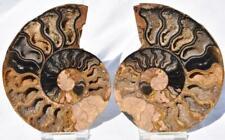 "Rare 1-n-100 Black Ammonite Pair Deep Crystals 110myo Fossil 112mm 4.4"" 3049"