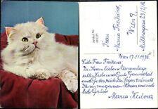 weiße Katze wohl ab 2010 Sehr hübscher Katzen-Zierknopf