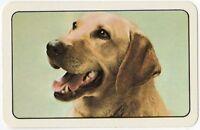 Playing Cards 1 Single Swap Card - Vintage LABRADOR Dog Portrait