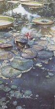 Steve Hanks WATER LILIES IN BLOOM art print