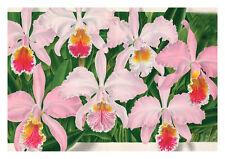 Cattleya Mossiae Hook by Jean Linden Orchids A4 Art Print