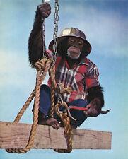1959 Vintage Print MONKEY HUMOR Chimpanzee CONSTRUCTION WORKER Animal Photo Art