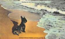 """Lavalletete New Jersey """"Greetings From"""" terrier dog on beach antique pc Z454694"""