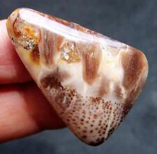 "1.33"" Jewelry Beautiful COCO FOSSIL Crystal CAB GEM"