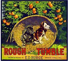 Santa Ana Rough and Tumble Puppy Dog Orange Citrus Fruit Crate Label Art Print