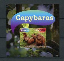 Guyana 2015 MNH Capybaras 1v S/S Rodents Wild Animals Stamps