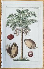 WILHELM: Botanical Engraving Palm (A) - 1810(NS)