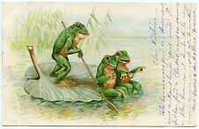 GRENOUILLES. FROGS. NéNUPHAR.