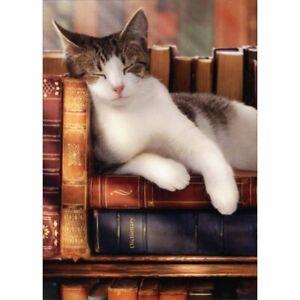 Avanti Press Sleeping Cat On Stack Of Books Graduation Card