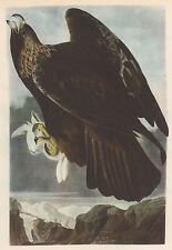 "JOHN J AUDUBON 1937 Book Print ""GOLDEN EAGLE"" Birds of America Painting"