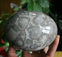 1786g TRILOBITE FOSSIL EGG LARGE SHELL FOSSIL CRYSTAL Ball Sphere