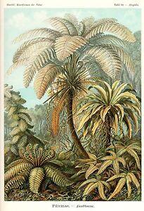 "Botanical Fern Art, Ernst Haeckel, Art Nouveau Print Paper or Canvas 4x6""-16x20"""