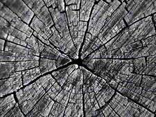 TREES VINTAGE PHOTOGRAPHY OLD CRACKED TRUNK RINGS WOOD ART PRINT POSTER BB10120
