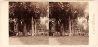 Egitto Cairo Ezbekieh Parc Albero c1880 Foto Alois Birra Stereo Vintage