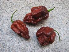 15 Bhut Jolokia Ghost Pepper Samen 15 Getrocknete Hälften 1 x Handschuhe