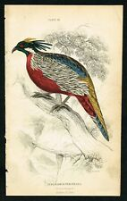 1850 Pucras Pheasant of India, Hand-Colored Antique Print - Lizars