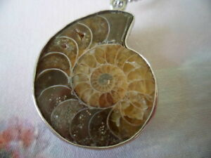 Vintage Sterling Silver Chain Necklace Genuine Ammonite Fossil Shell Pendant