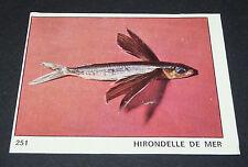 N°251 HIRONDELLE DE MER POISSON PANINI 1970 TOUS LES ANIMAUX EDITIONS DE LA TOUR