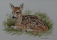 David Parry Original Watercolour Painting - Young Deer (British Wildlfe Art)