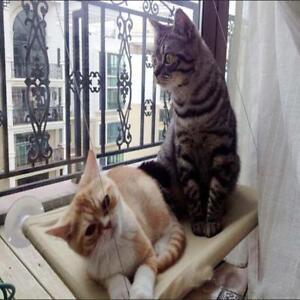 Kitty Cat Basking Window Hammock Mounted Perch Cushion Bed Hanging Shelf Seat MN