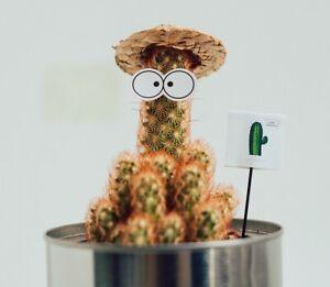 15pc party drink decoration plant mini hat for Succulents house plant decoration