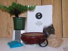 Juniper Bonsai Tree starter kit with Live tree