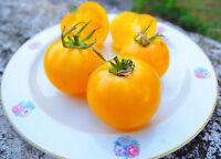Bulgarische gelbe Tomaten Saatgut 10+ Samen