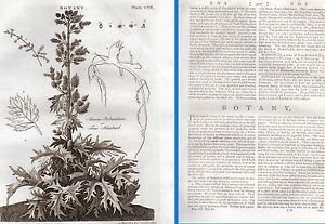 1797 GEORGIAN TREATISE/ARTICLE + 6 PLATES ~ BOTANY 57 PAGES 18thC BRITANNICA