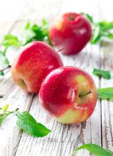 Macintosh Apple Candle Fragrance / Soap Making Fragrance Oil 1-16 Ounce