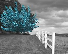 Black White Blue Tree Landscape Modern Home Decor Wall Art Matted Picture
