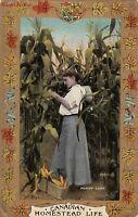 Postcard Canada Picking Corn Canadian Homestead Life
