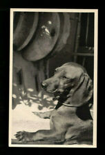 Rppc Real Photo Dachshund In The Sun Doxie Techel Badger Dog 1945-1950'S