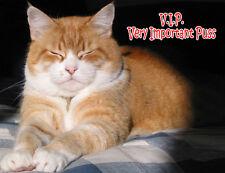 Ginger Cat Fridge Magnet, V.I.P. Very Important Puss